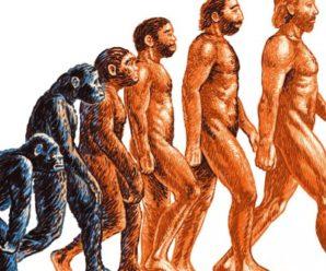 По следам эволюции человека