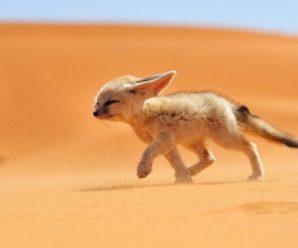 Дикая природа пустыни — Затерянный мир