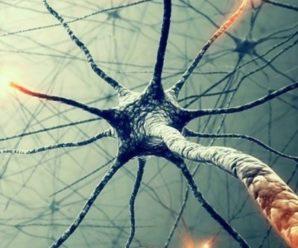 Тайны сознания — Бог в нейронах