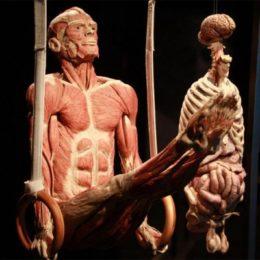 Неизведанное тело человека