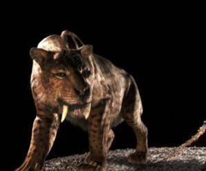 Саблезубый тигр — ужасающие доисторические хищники
