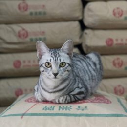 Невидимая и тайная жизнь кошек