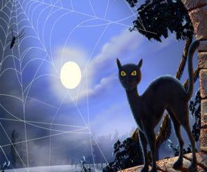 Мистические способности кошек