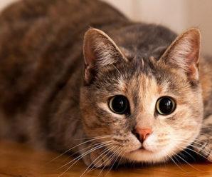 Кошки — загадочные спутники человека