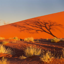 Намиб – раскаленный берег Африки