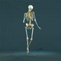 Тайны анатомии. Скелет