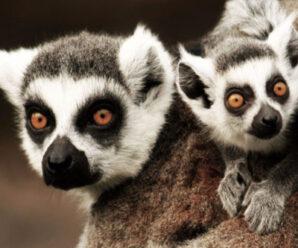 Мадагаскар — Легенда острова лемуров